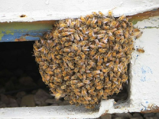 Got A Swarm? – Leicestershire and Rutland Bee Keepers Association